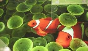 Наливные полы 3D – продолжают эру объемных изображений