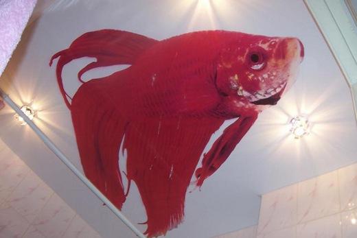Натяжной потолок с рисунком в ванной комнате