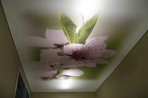 «Трёхмерная» фотопечать на потолке