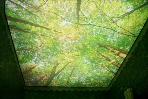 Зеленый лес на натяжном потолке