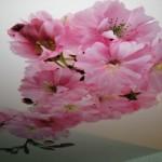 Объемные цветы на фотопечати: натяжной потолок