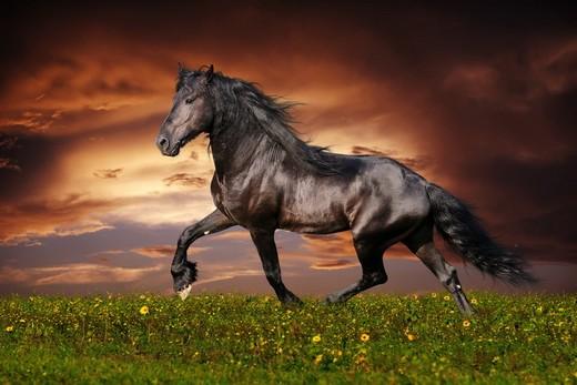 Великолепная лошадь на натяжном потолке